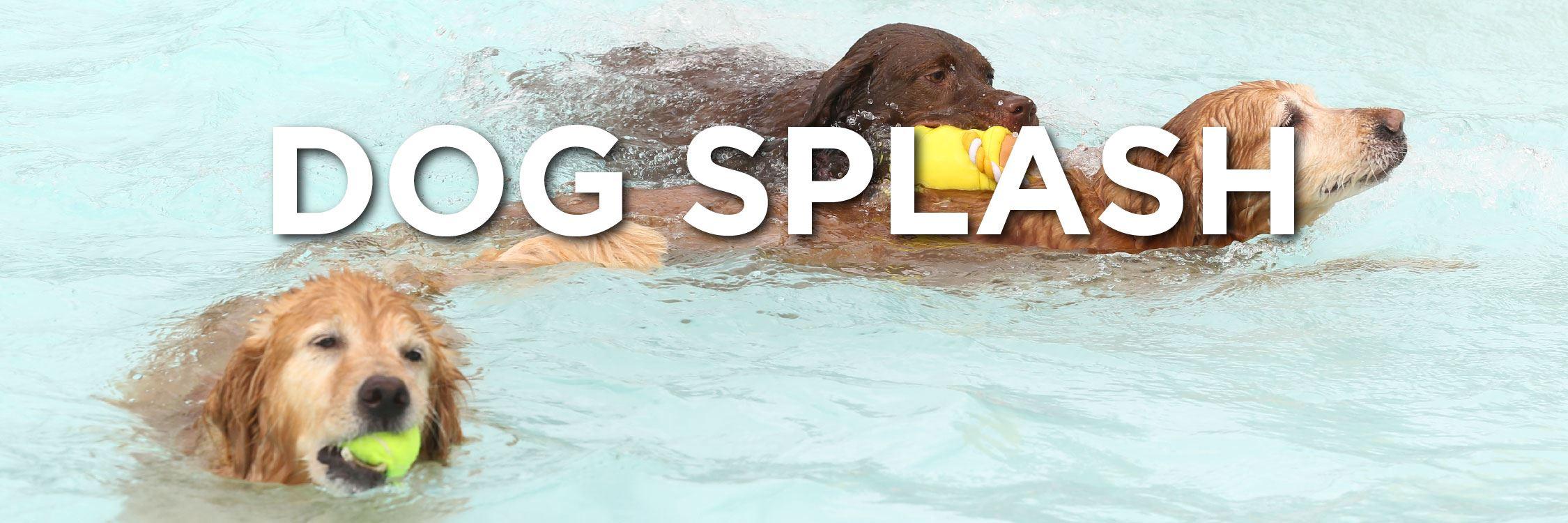 Dog Splash Web Strip-07